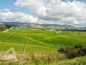 Photo: The drive from Dunedin was 4 hours of sheep.