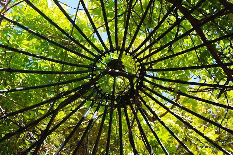 Corona d'oro verde di Giulia Cacciatore