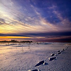 Footprints in the Snow Pixoto.jpg