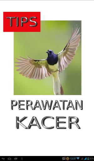 Tips Perawatan Burung Kacer