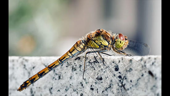 Dragonfly Top Rated Wallpapers