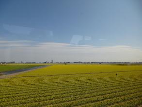 Photo: Flower fields