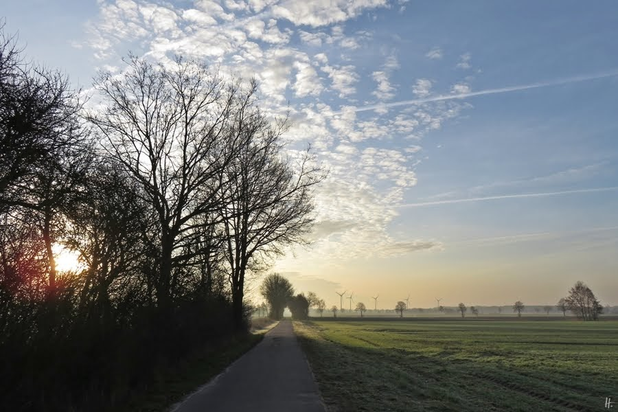2019-02-26 LüchowSss morgens 7h48 - nahe bei der Raubwürger-Stelle
