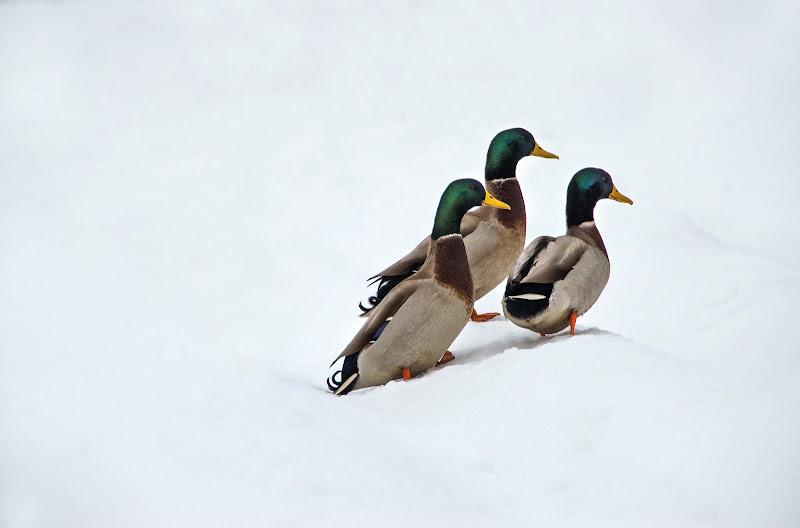 A spasso nella neve di Moreno re