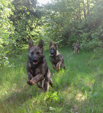 Photo: Ayla, Argus og Tasha