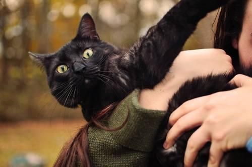 Selective Focus Close-up Photo of Person Carrying a Black Cat