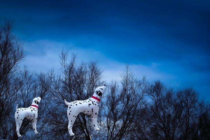 Cani volanti di manu70