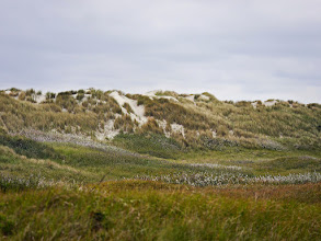 Photo: die blühenden Pflanzen in den Dünen