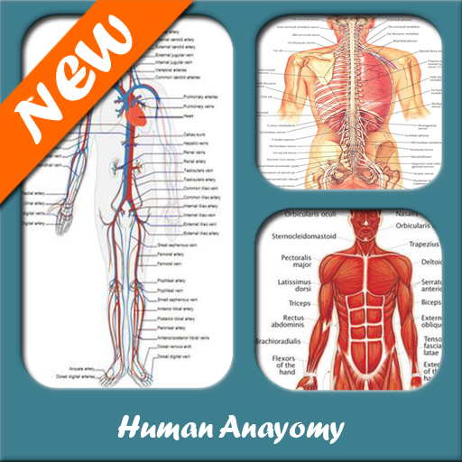 Baixar Anatomia humana para Android