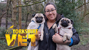 The Yorkshire Vet thumbnail
