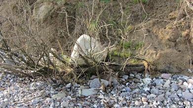 Photo: Ein Dinosauriernest, der Dinosaurier hat sich beim Nestbau nicht viel Mühe gemacht.