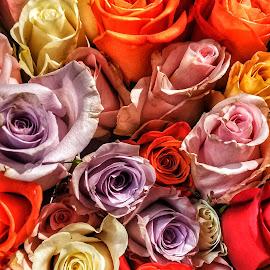 Rose Arangement. by Brian Hood - Flowers Flower Arangements ( #flowers, #roses )