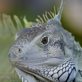 Mood face by Wahid Hasyim - Animals Reptiles ( reptiles, face, animals, faces, photographer, reptile, close up, photography, animal,  )