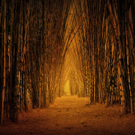 by Daniel Chang - Landscapes Forests