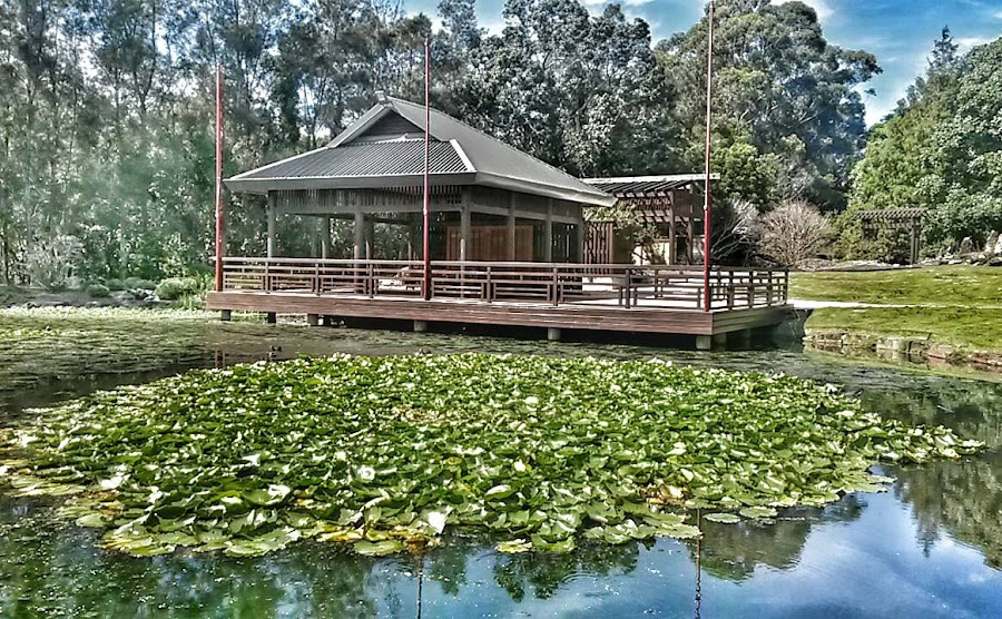 Japanese Lake, Botanical Gardens by Emma Kelly - City,  Street & Park  City Parks ( beautiful, coffs harbour, botanical garden, lily pads, relaxing )