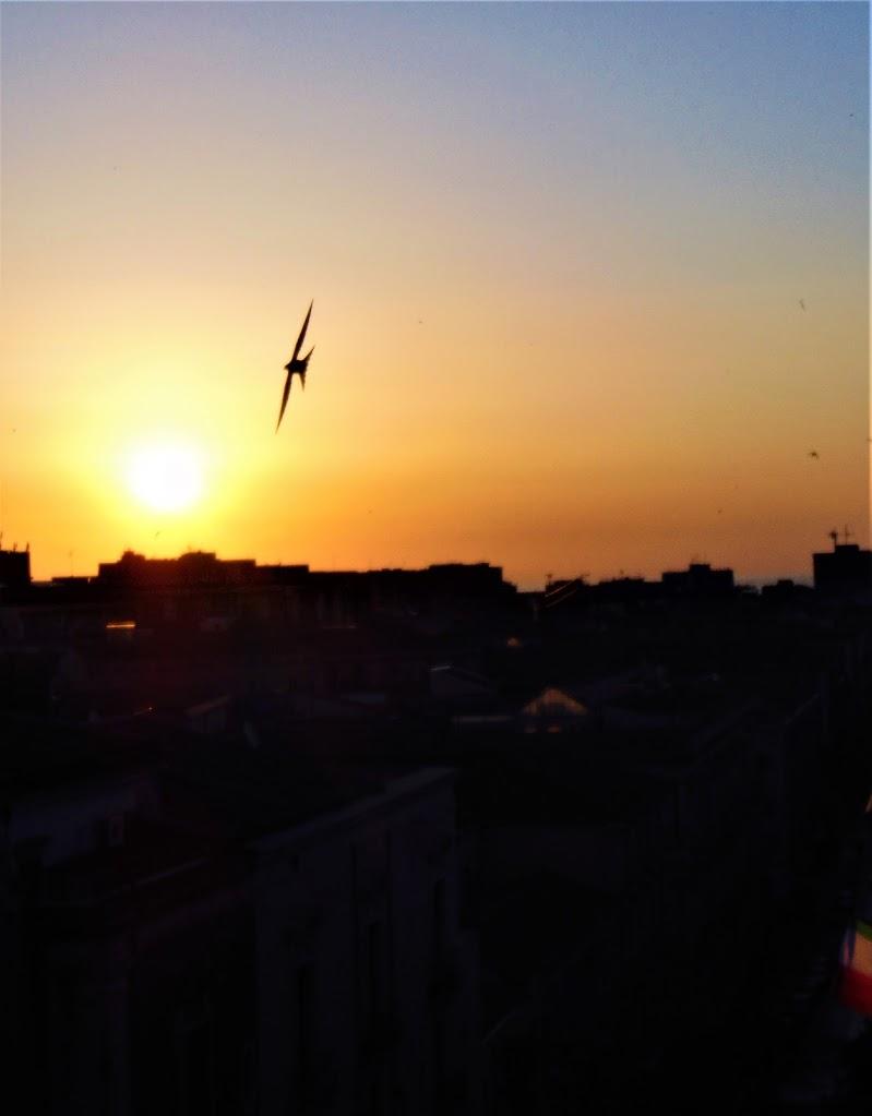 ad ali spiegate di auroramaviaggiare