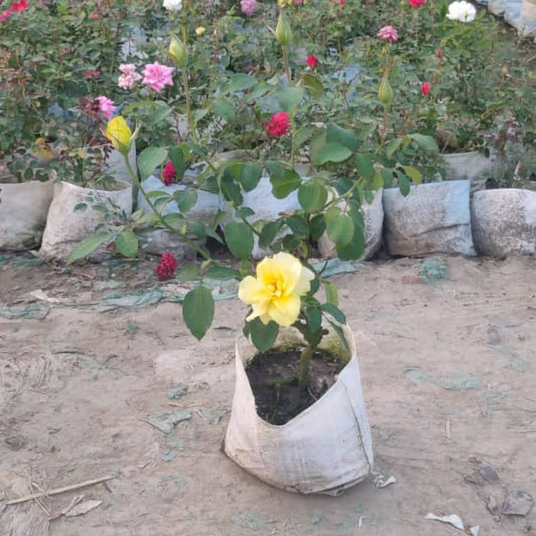 Plaza Nursery And Landscape Agricultural Service Supply Agency In Jamshedpur