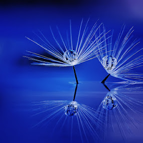 The Soulmate by Setiady Wijaya - Nature Up Close Flowers - 2011-2013