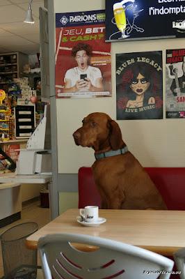pies kawiarz