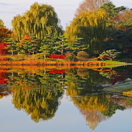 Fall by Anthony Goldman - Landscapes Waterscapes ( landscapes, fall, reflectio, colors, botanic garden )