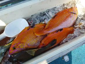 Photo: そしてイノウエさんの釣果。 良型アカイサキも入りました。