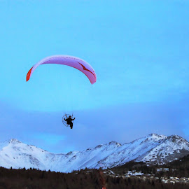 Paragliding Over The Mountains by Patricia Phillips - Sports & Fitness Other Sports ( alaska sports paragliding )