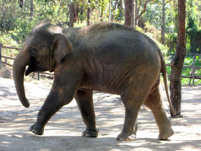 Photo: Well, up close and personal, he doesn't look quite so old -- for an elephant, that is.