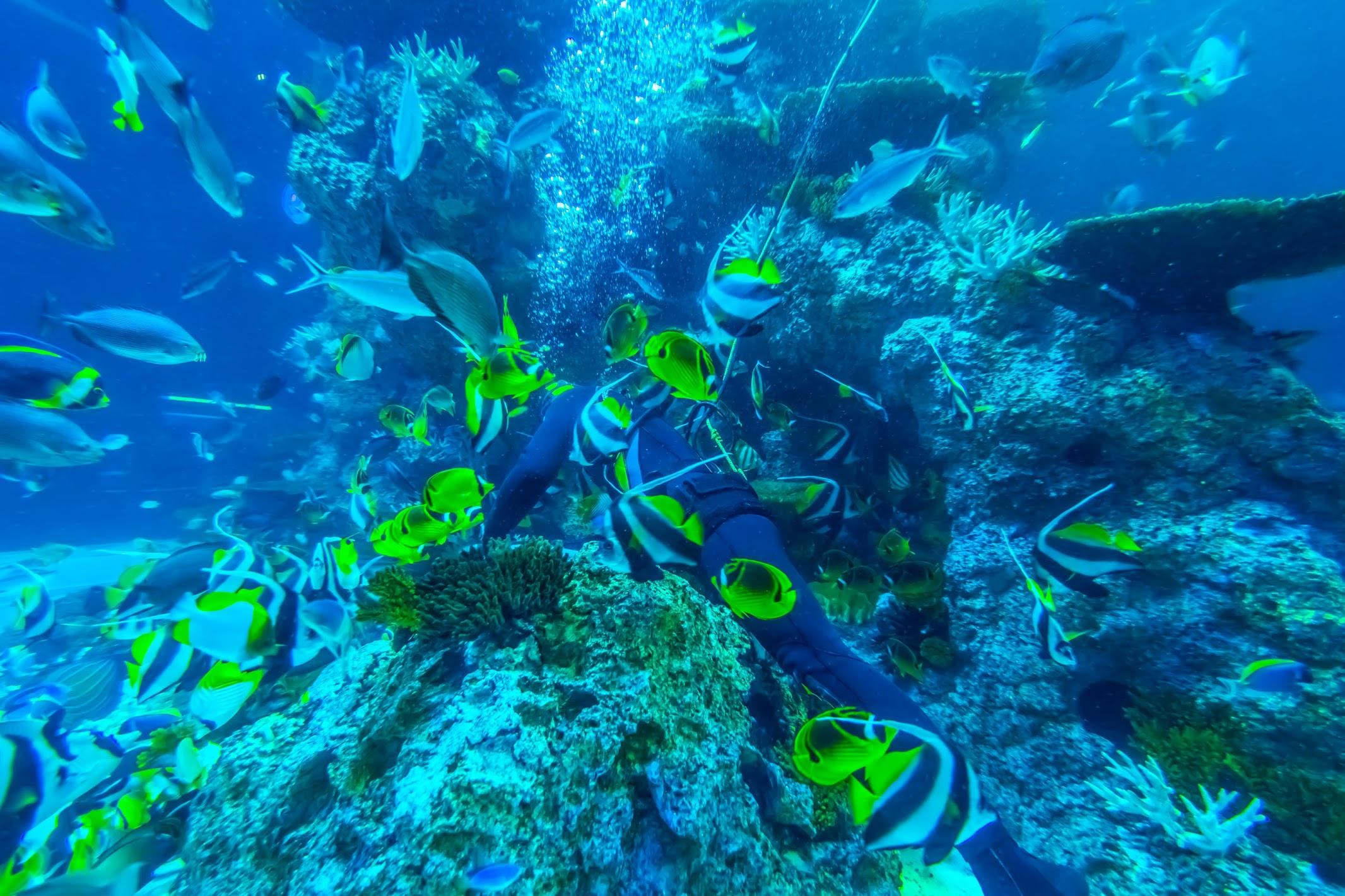 シンガポール セントーサ島 シー・アクアリウム Coral Garden2