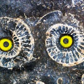 Owly by Brad Cheek - Digital Art Things ( colour, owl, stone, ammonites, eyes )