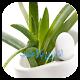 العلاج بالأعشاب (app)