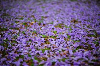 Photo: the color purple #flowerphotography  #purpleflowers