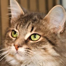 by Linda    L Tatler - Animals - Cats Kittens