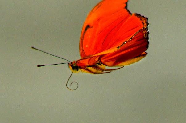 Leggerezza di una farfalla  di stefano_angeli