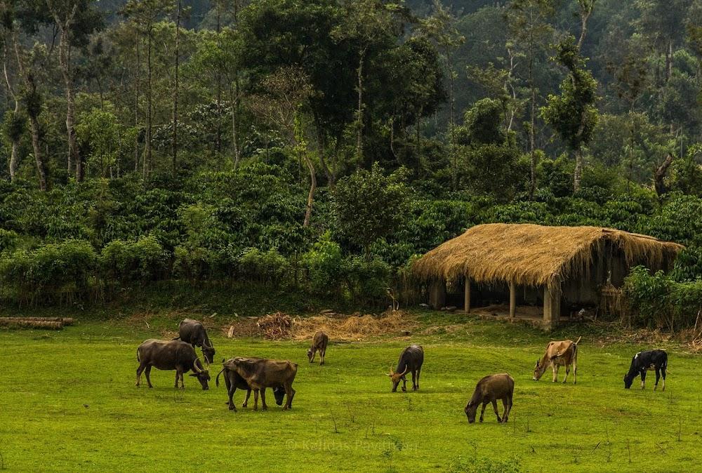 ultimate-guide-best-tourist-places-india-Karnataka