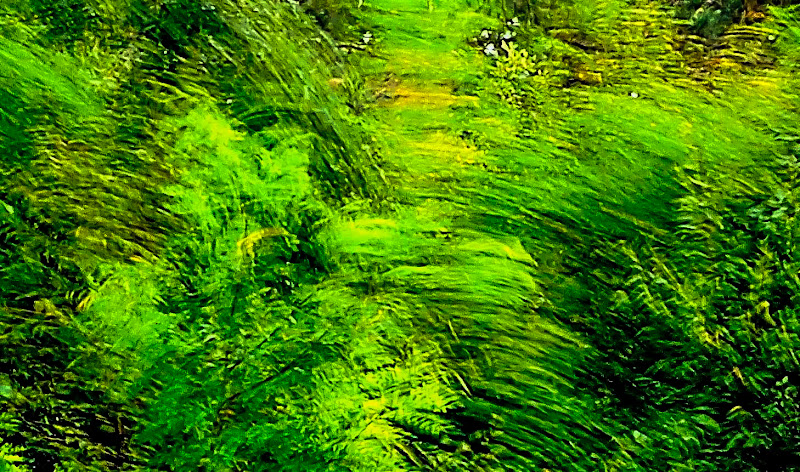 Van Gogh on Nikon di gianmichele_arrighetti