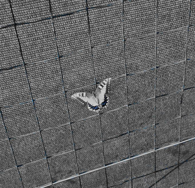 Butterfly di Braivan Photo
