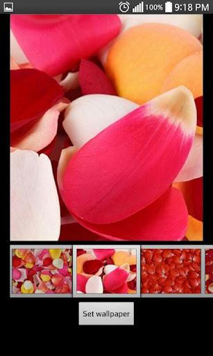 バラの花びらライブ壁紙