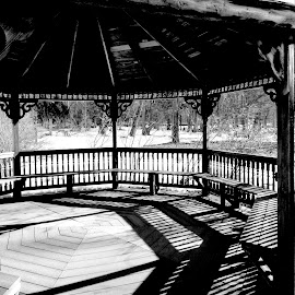 Shadows by Peggy LaFlesh - Black & White Buildings & Architecture ( snow, trees,  )