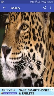New Stunning HD Leopard Wallpapers - náhled