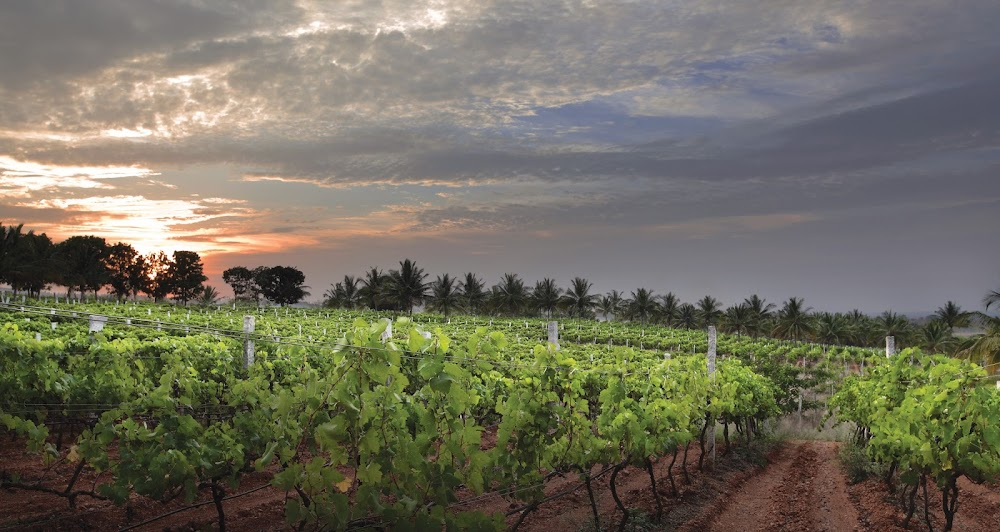 how-to-plan-a-first-date-in-bangalore_grover_zampa_vineyard