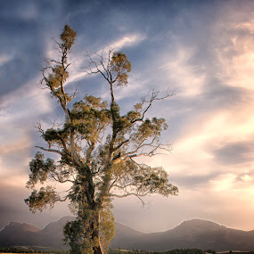 cazneaux tree wilpena pound by Gary Parnell - Landscapes Prairies, Meadows & Fields ( cazneaux tree wilpena pound, wilpena area )
