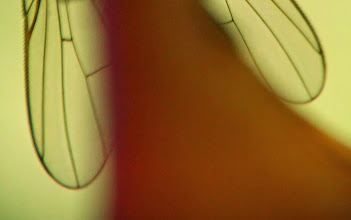 Photo: espina alada