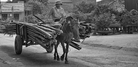 Photo: Transporting Bamboo
