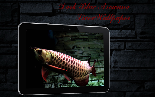 Dark Blue Arowana Fish LWP