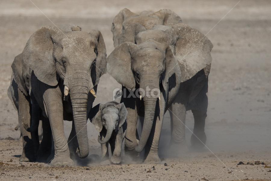 Etosha National Park - Namibia by Johan Louw - Animals Other ( elephants in etosha national park - namibia )