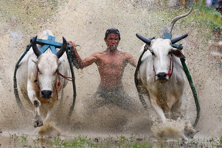 by Bernard Tjandra - Sports & Fitness Rodeo/Bull Riding