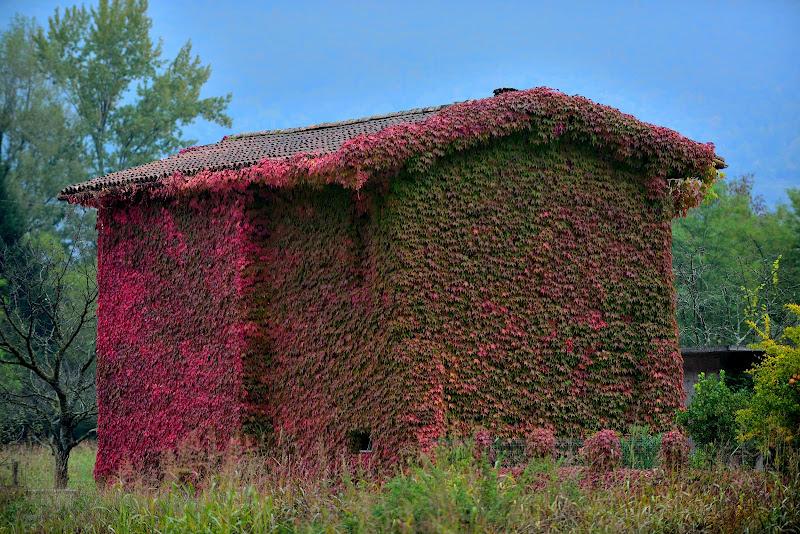 Vieni,c'è una casa nel bosco,il suo nome conosco,vuoi conoscerlo tu!!  di Matteo Faliero
