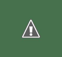 Photo: Purple Heron pair