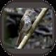Download Kicau Burung Siri Siri Super For PC Windows and Mac