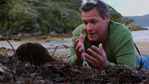 Best of Adventure New Zealand thumbnail
